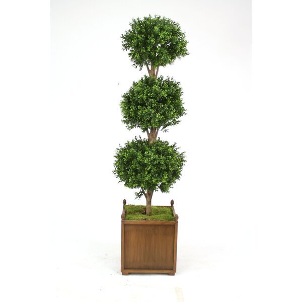 Boxwood Triple Ball Topiary in Planter by Distinctive Designs