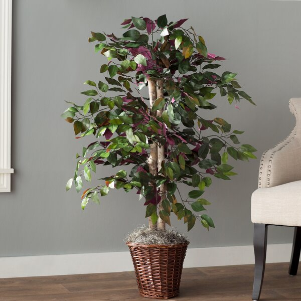 Oberham Capensia Tree in Basket by Charlton Home