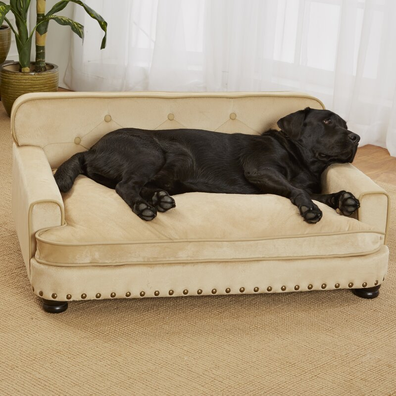 Exceptional Lolita Library Dog Sofa