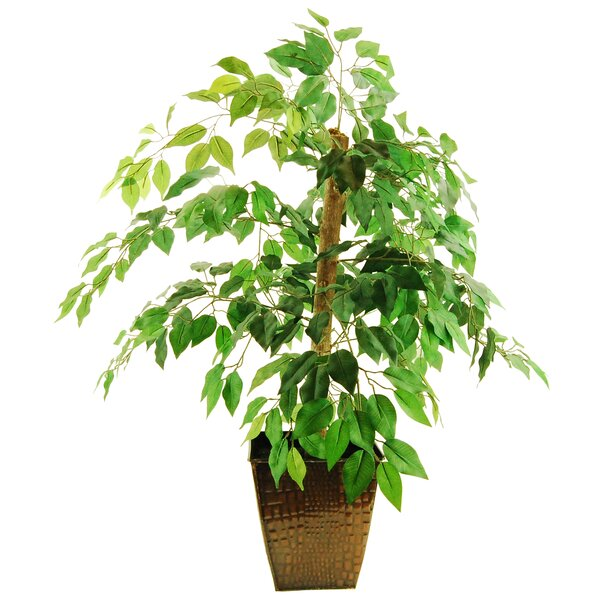 Mini Ficus Tree in Planter by LCG Florals