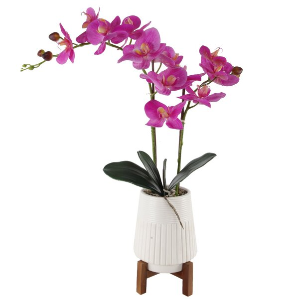 Real Touch Orchids Stem in Pot by Ebern Designs