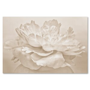 White Peony by Cora Niele Photographic Print on Wrapped Canvas by Trademark Fine Art