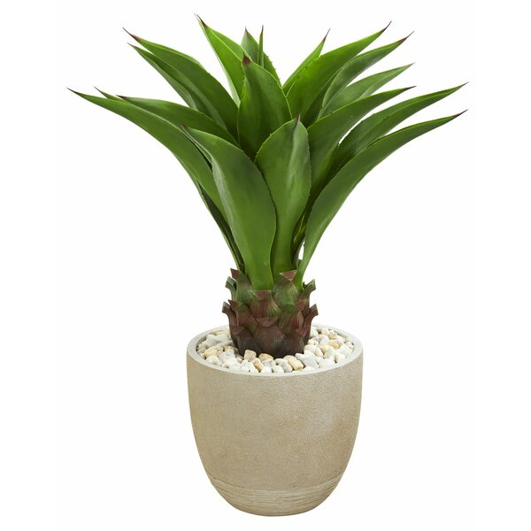 Agave Floor Foliage Plant in Planter by George Oliver