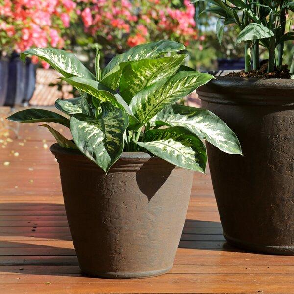 Severus Flower Resin Pot Planter by August Grove