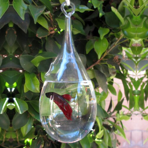 Modern Home Hanging Glass Aquarium Tank by Vandue Corporation