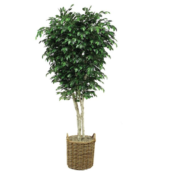 Topiary Ficus Tree in Basket by Distinctive Designs