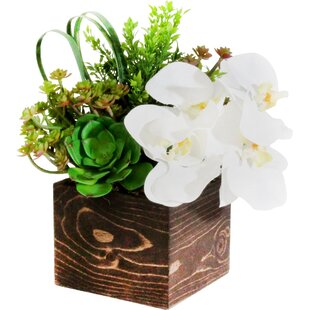 impressive design modern succulent planter. Orchid and Succulent in Wooden Planter Modern Faux Plants  Florals AllModern