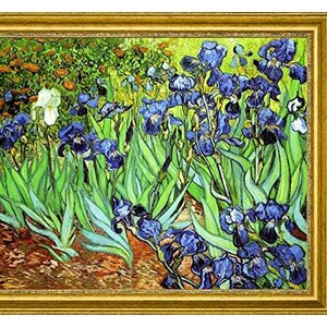'Irises' by Vincent Van Gogh Framed Painting Print by Canvas Art USA