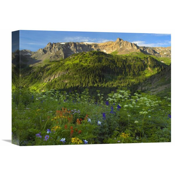 Nature Photographs Wildflower Meadow Looking Towards Mount Sneffels Wilderness, Yankee Boy Basin, Colorado by Tim Fitzharris Photographic Print on Wrapped Canvas by Global Gallery