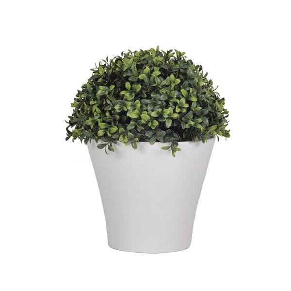 Artificial Half Ball Boxwood Topiary in Pot by House of Silk Flowers Inc.