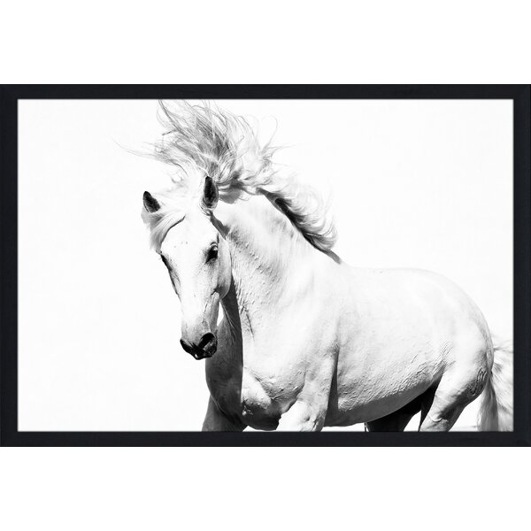 Horse Running Framed Photographic Print by Picture Perfect International