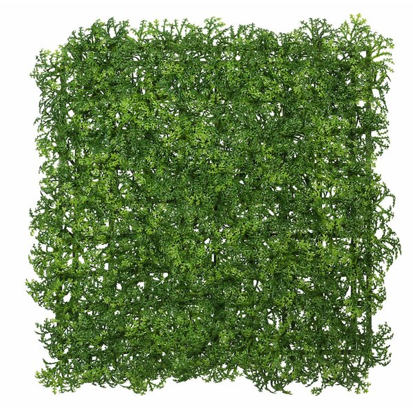 Artificial Square Button Fern Matt Foliage Topiary by Laurel Foundry Modern Farmhouse