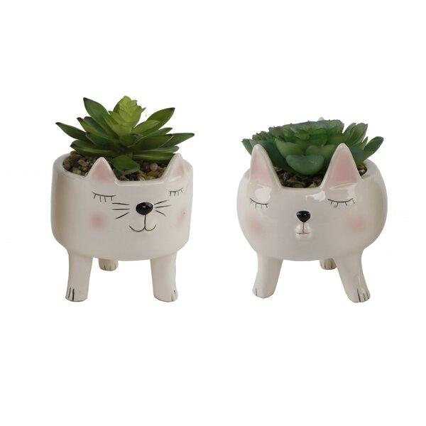 2 Piece Cat Succulent Desktop Plant in Pot Set by Ebern Designs