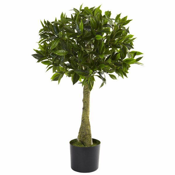 Bay Leaf Round Topiary in Pot by Alcott Hill