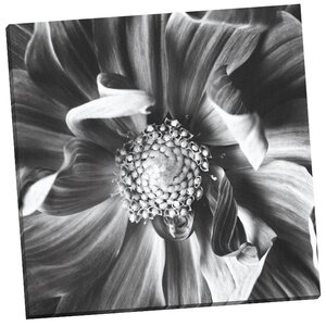 Dahlia III by Michael Harrison Photogarphic Print on Wrapped Canvas by Portfolio Canvas Decor
