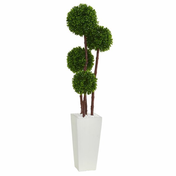 Boxwood Topiary in Planter by Latitude Run