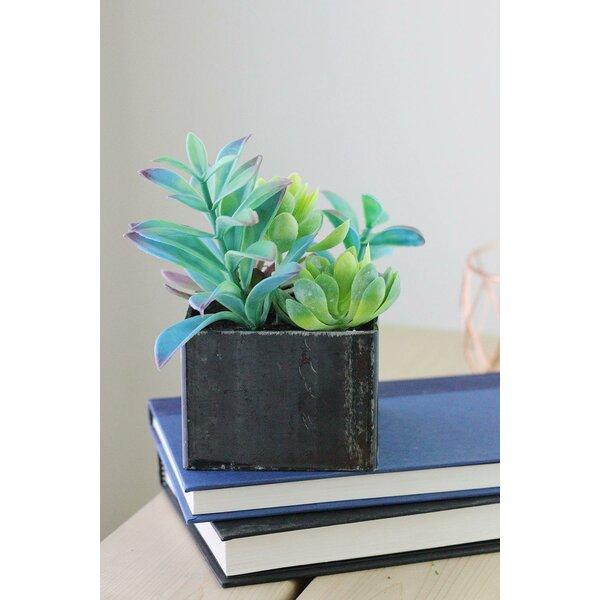 Artificial Desktop Succulents Arrangement Plant in Pot by Bungalow Rose
