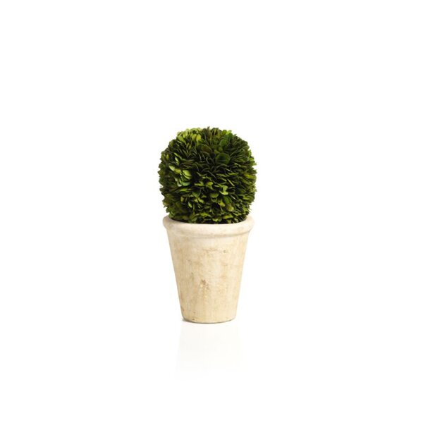 10-inch Tall Preserved Single Ball Floor Boxwood Topiary in Pot by Zodax