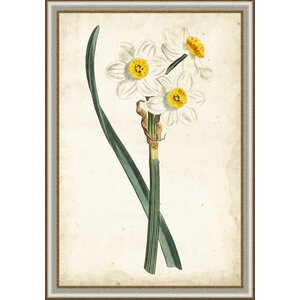 In Bloom 'Curtis Narcissus III' Framed Painting Print by Ashton Wall Décor LLC