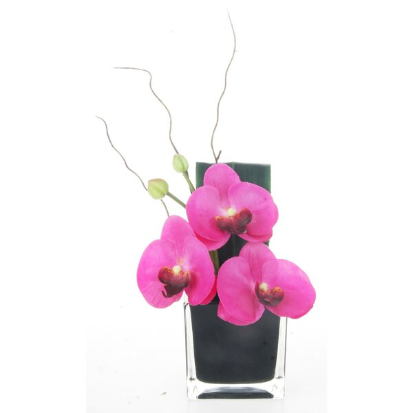 Phalaenopsis 11 x 5.25 Arrangement in Glass Base (Set of 2) by Red Vanilla