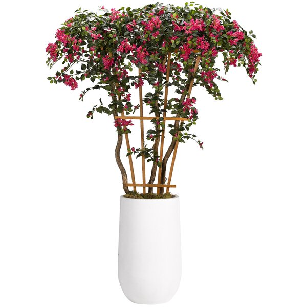 Bouganvillea Flowering Tree in Tall Round Clay Planter (Set of 3) by Canora Grey