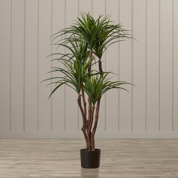 Tropical Yucca Tree in Pot by Beachcrest Home