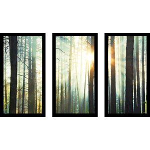 Sunset in The Woods 3 Piece Framed Photographic Print Set by Picture Perfect International