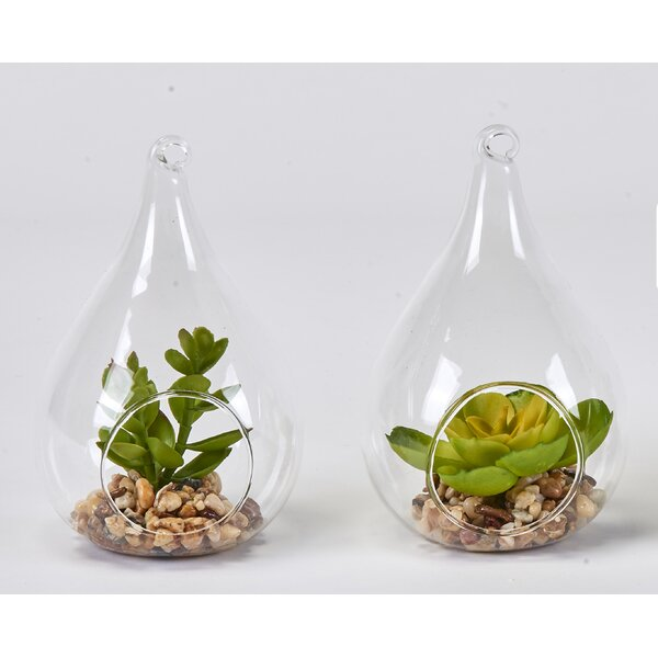 Faux Succulent Desktop Plant in Glass Vase Set (Set of 2) by Bungalow Rose