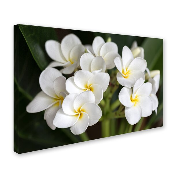 Plumeria Flowers by Pierre Leclerc Photographic Print on Wrapped Canvas by Trademark Fine Art