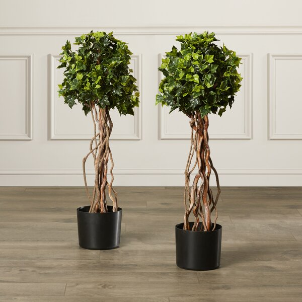Artificial English Ivy Topiary Tree in Pot (Set of 2) by Darby Home Co