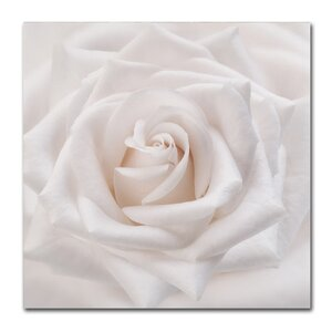 Soft White Rose by Cora Niele Photographic Print on Wrapped Canvas by Trademark Fine Art