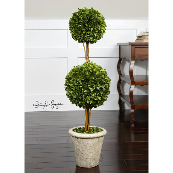 Preserved Boxwood 2 Sphere Topiary in Planter by One Allium Way
