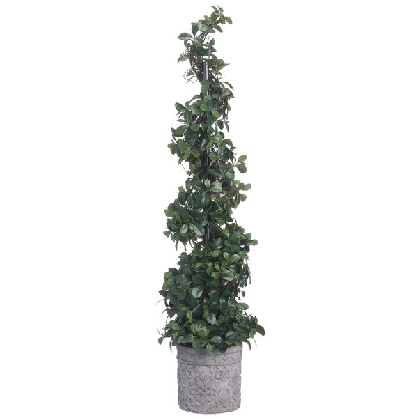 Citrus Leaf Spiral Foliage Topiary in Planter by Fleur De Lis Living