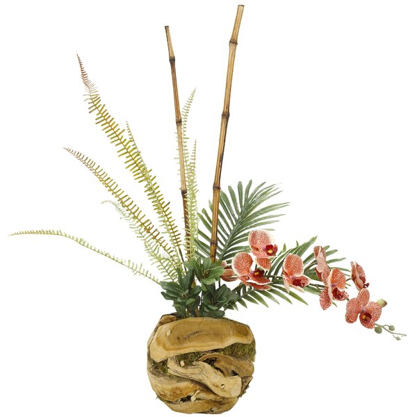 Phael Orchids Root Flowering Plant in Wooden Planter by Bayou Breeze