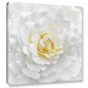 'White Rose' Photographic Print on Wrapped Canvas by Willa Arlo Interiors