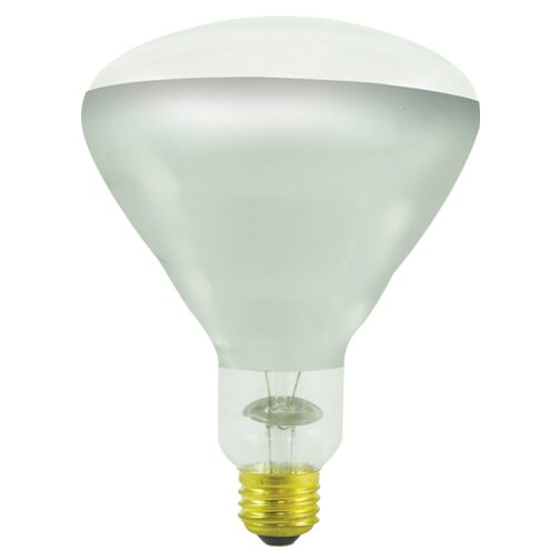 250W Incandescent Light Bulb (Set of 3) by Bulbrite Industries