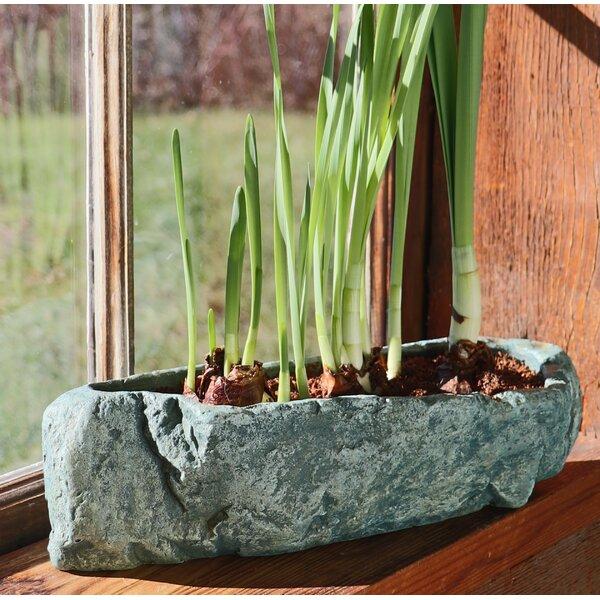 Pardo Natural Elements Rock Concrete Pot Planter by Bloomsbury Market