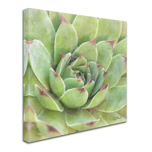 'Garden Succulents IV Color' Photographic Print on Wrapped Canvas by Trademark Fine Art