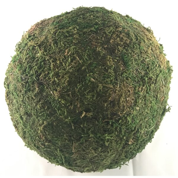 Cottage Moss Ball Sculpture by Ophelia & Co.