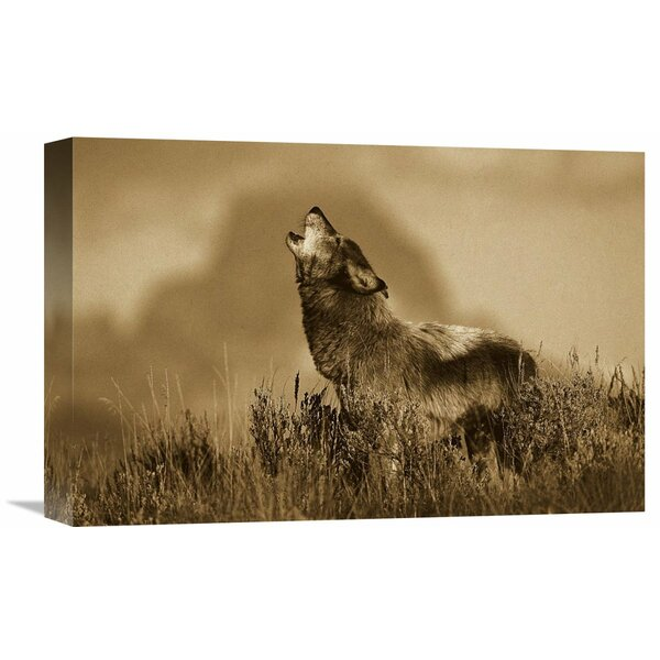 Nature Photographs Timber Wolf Adult Howling, Teton Valley Idaho by Tom Vezo Photographic Print on Wrapped Canvas by Global Gallery