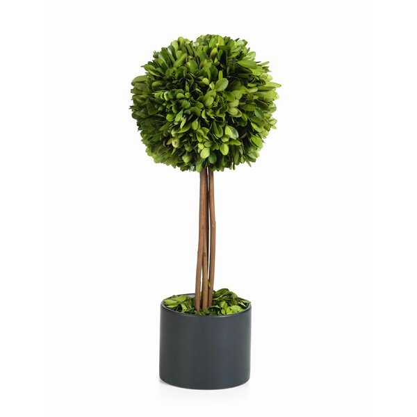15-inch Tall Preserved Single Ball Floor Boxwood Topiary In Pot by Zodax