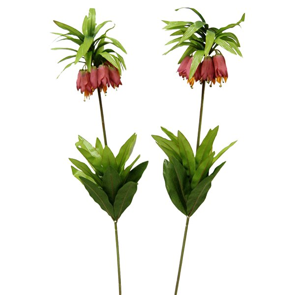Rare Tropical Bellflower (Set of 2) by Bay Isle Home