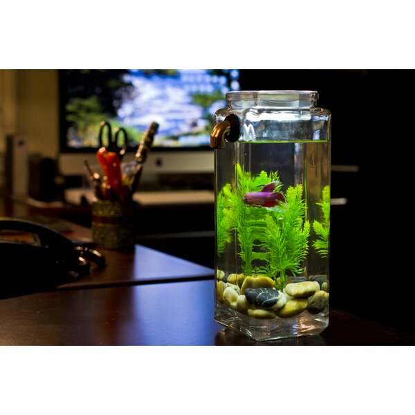 Ocilla 0.5 Gallon Aquarium Kit by Tucker Murphy Pet