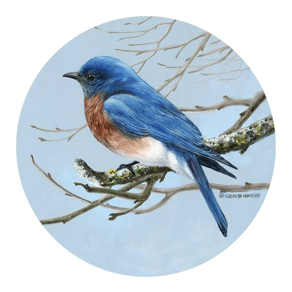 Bluebird Coaster (Set of 4) by Thirstystone