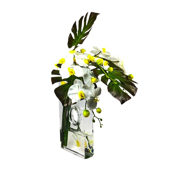Phalaenopsis Square Orchid Floral Arrangement in Vase by Bayou Breeze