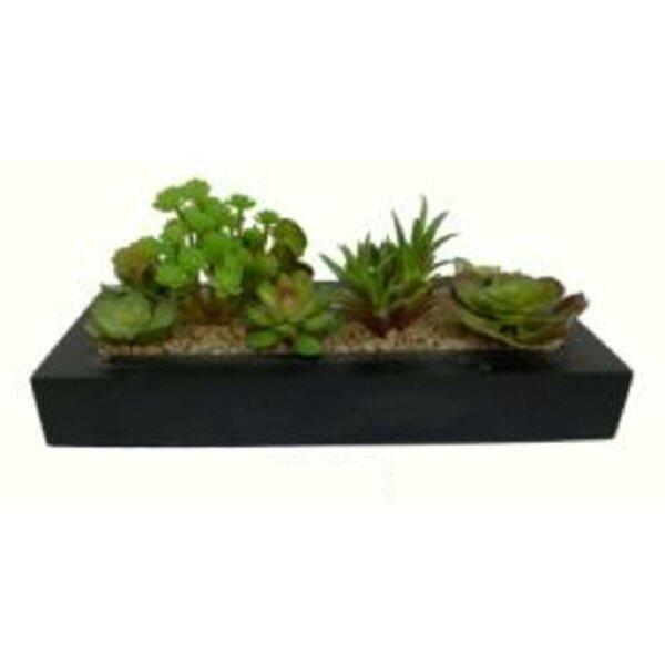 Decorative 7 Desktop Succulent Plant in Planter by Bungalow Rose