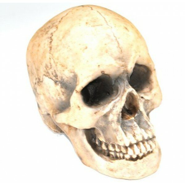 Replica Faux Taxidermy Human Skull Figurine by Near and Deer