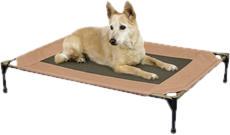 Cot Dog Beds