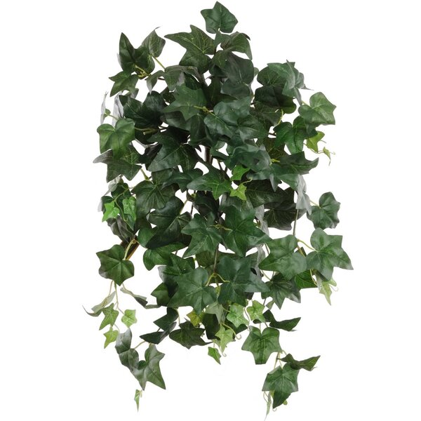 24 Hanging English Ivy Plant (Set of 6) by Larksilk