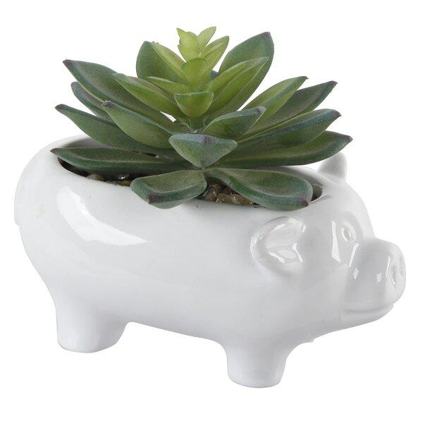 Ceramic Pig Desktop Succulent Plant (Set of 2) by August Grove